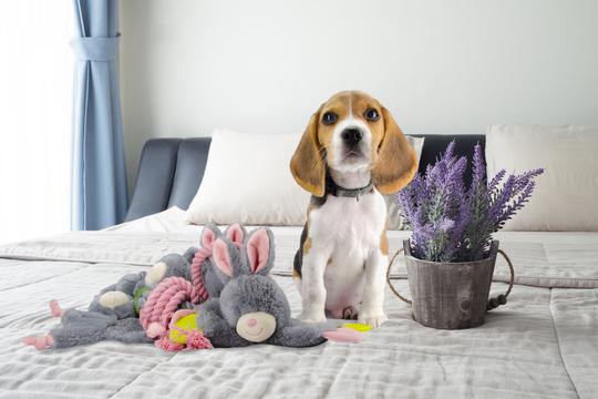 Afbeeldingen van Bunny Puppy Crunchy Knot